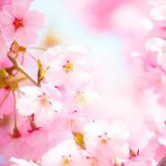 4月,春爛漫ハンバーグランチコース,春風プレミアムランチコース